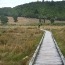 Lake Okareka Wetlands - NZ