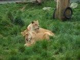 Paradise Valley Lion & Wildlife Park