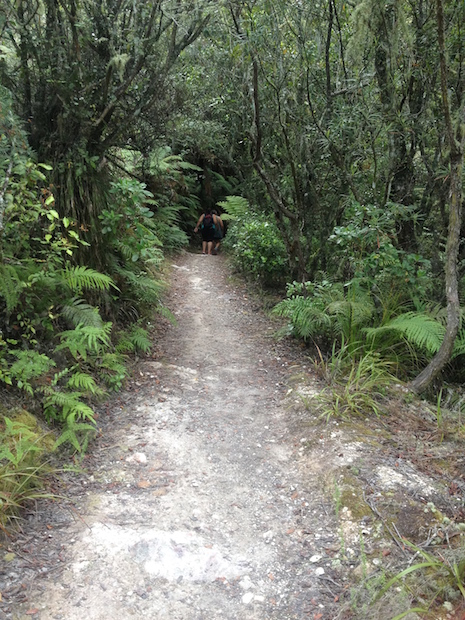 More regenerating forest towards the top of Rainbow Mountain, Waiotapu, NZ.