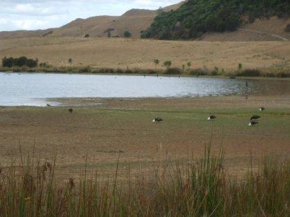 Okareka wetlands in drought conditions