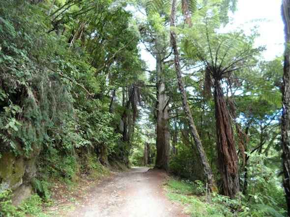 Walking track around the Blue Lake (Tikitapu), Rotorua, New Zealand.