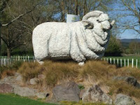 Agrodome Sheep Show & Farm Tours