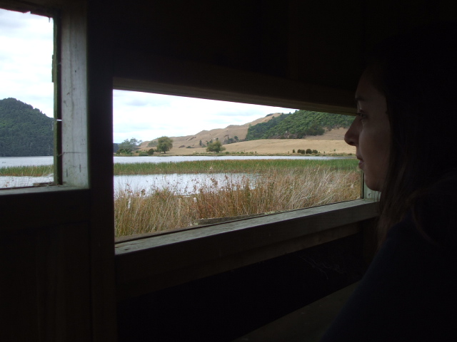 Bird watching in New Zealand