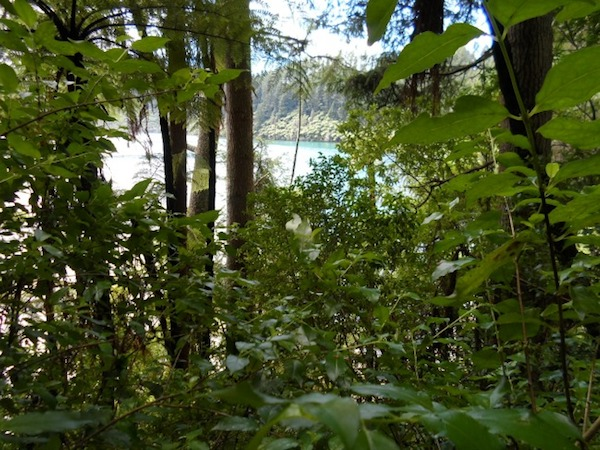 Blue and Green Lakes in Rotorua - Blue Lake.