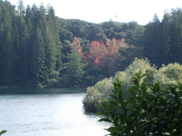 Autumn at the Green Lake (Rotokakahi), Rotorua, NZ.