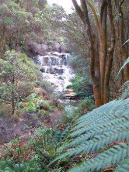 Kakahi Falls at Hells Gate Rotorau