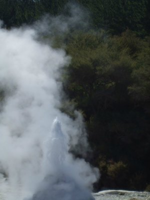 Lady Knox Geyser at Waiotapu, Rotorua beginning to erupt.