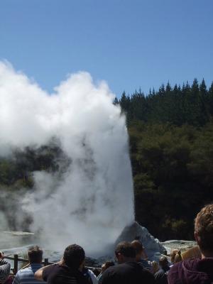 Lady Knox Geyser at Rotorua, NZ, erupting