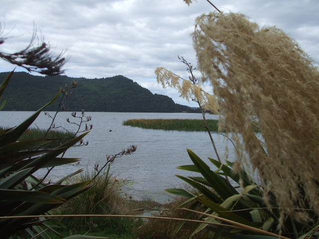 Lake Okareka view from the walking track