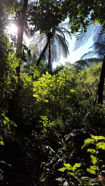 Mokoia Island tours include a walk through lush bush.