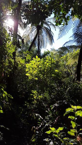 Mokoia Island tours include a walk through lush bush.
