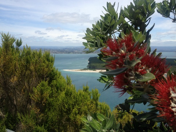 Snippet of a view from Mount Manunganui's summit to the port side.