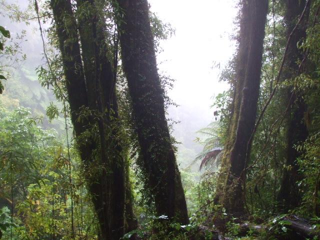 Mount Ngongotaha walks at Rotorua, NZ - A view through the mist