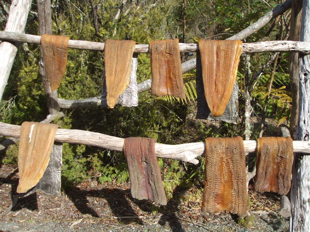Examples of native NZ fish drying - Te Puia, Rotorua