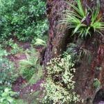 New Zealand native flora on Mount Ngongotaha, Rotorua.