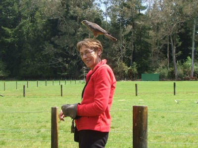 NZ bird of prey at Wingspan, Rotorua.