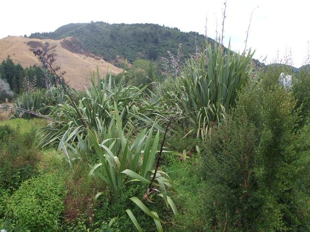 The bush around Okareka includes plants and shrubs native to New Zealand.