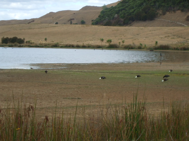 Okareka wetlands in drought conditions