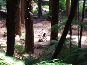 Rotorua Mountain Biking - A Young Guy Practising His Bike Skills