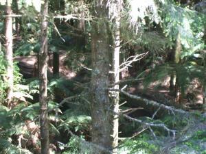 Rotorua Mountain Biking - Can you see it? One of the many tracks.
