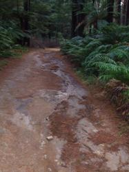 Rotorua Mountain Biking - One of the many trails