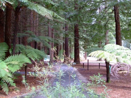 Rotorua Redwoods - The entrance to the tracks
