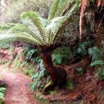 Secret Ponga Track Walk - NZ
