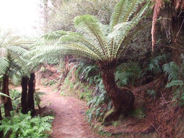 A secret Rotorua Walk - A single misshapen ponga