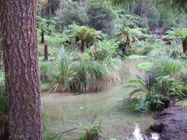A secret Rotorua Walk - The Ponga Track (Official name Puarenga Walk)