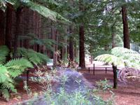 The Redwoods at Rotorua, N