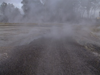 Sulphur Point, Rotorua - thermal  steam across the trac