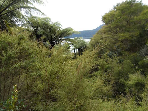 View from Tarawera Trail to Lake Tarawera