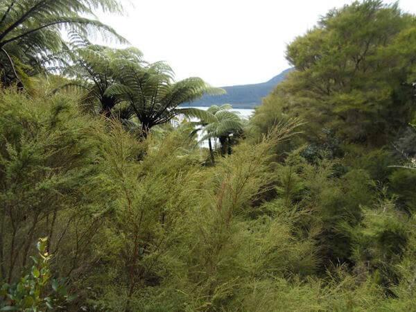 View from Tarawera Trail to Lake Tarawera