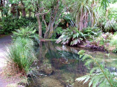 Te Wairoa River at the Buried Village