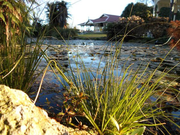 Getting around Rotorua, NZ, on foot at the Government Gardens