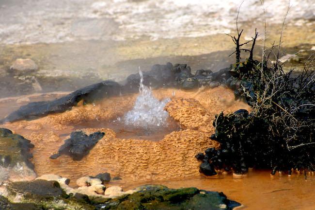 Birds Nest Spring - Image © Waimangu Volcanic Valley.