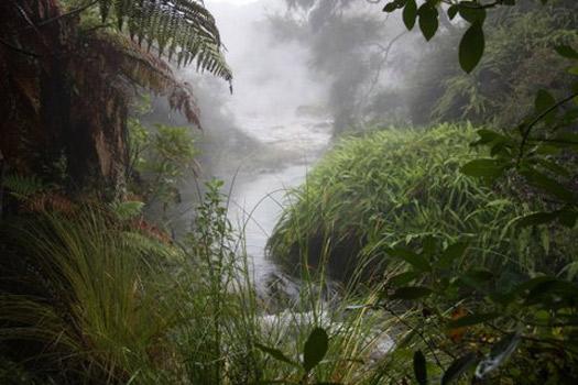 © Waimangu Volcanic Valley Img - Hot stream.