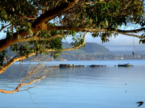 Rotorua's summer weather is up and down.