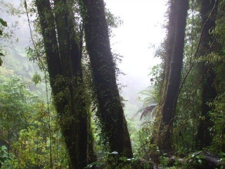 Mount Ngongotaha walks at Rotorua, NZ - A view through the mist
