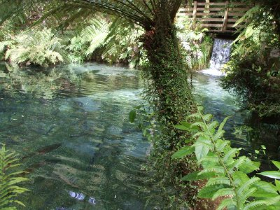 Paradise Valley Rotorua, NZ - rainbow trout pool