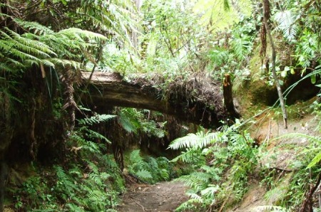Rotorua Redwoods Quarry Track, New Zealand