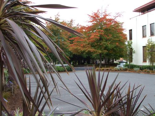 Rotorua weather can be lovely and mild in autumn.