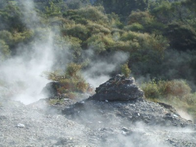 Rotorua geothermal scenery - plants clinging to rocks