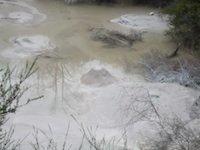 Rotorua Thermal - mud poo