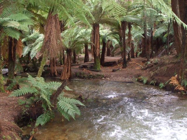 A secret Rotorua Walk - A ponga forest.