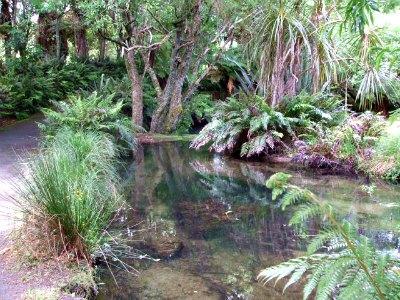 Te Wairoa River at the Buried Village